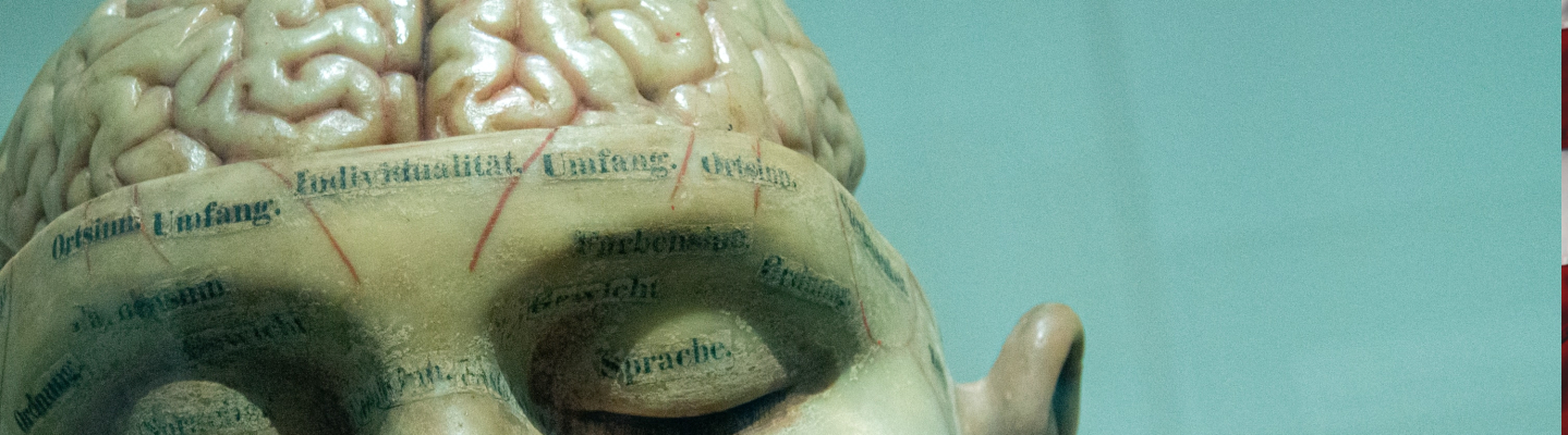 A sculpture of a head with the top half of the brain revealed.