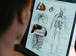 A person studying anatomy on a tablet.